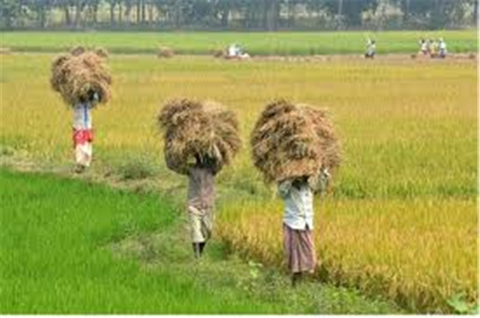 contribution of agriculture to bangladesh ecconomy Bangladesh is considered as a developing economy yet, almost one-third of bangladesh's 150m employed in the agriculture bangladesh gdp growth.